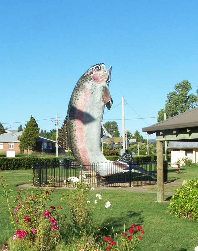 'The Big Trout Adaminaby